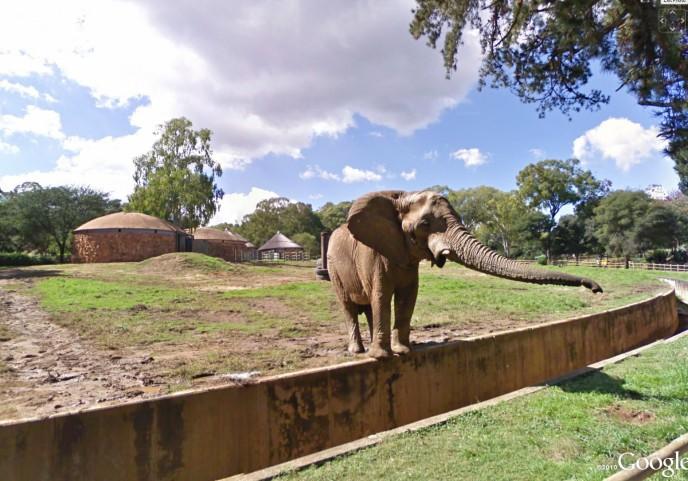 Zoo-Org